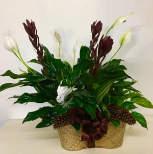 Sympathy Garden Plant Basket Peace Lily, Pothos Ivy, White Dove in Plainview, TX | Kan Del's Floral, Candles & Gifts