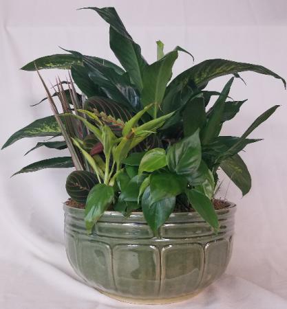GARDEN PLANTER Green Plants