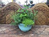 Garden plants Herbs from Roma Florist