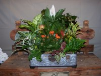 Garden Trunk Plants