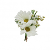 Gentle Daisy Boutonniere