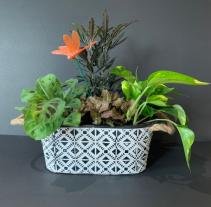 Geometric Tropical Garden  Plant Basket