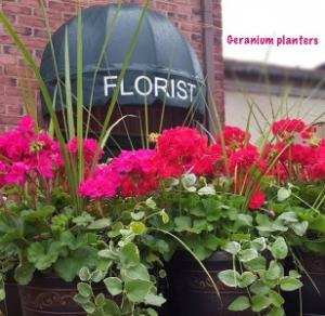 Geranium Planters Blooming plants in Chatham, NJ | SUNNYWOODS FLORIST