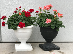 Geranium Porch Pot in Warsaw, IN | ANDERSON FLORIST & GREENHOUSE