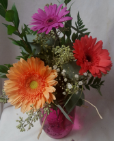 """GERBERA BRIGHTS"" 3 LARGE BRIGHT COLORED Gerberas in a colored mason jar with filler. Flower and mason jar colors may vary with stock."