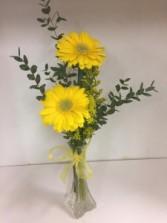 Gerber Daisy vase 2 gerbera daisies in vase