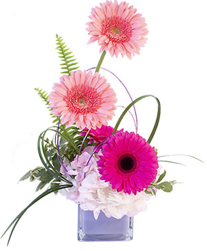 Gerbera Blush Flower Arrangement in Dawsonville, GA | The Flower Mart