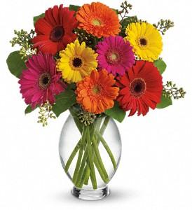Gerbera Brights  in Portage, IN | Flower Power Designs