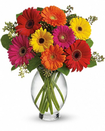 "Gerbera Brights T156-1 13.5""(w) x 15""(h) ONE SIDED"