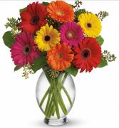Gerbera Brights Vase