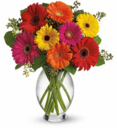 Gerbera Brights Vase Arrangement