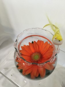 Gerbera Butterfly Bowl any occasion