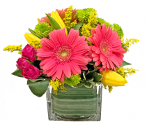 Gerbera Charm Cut flowers