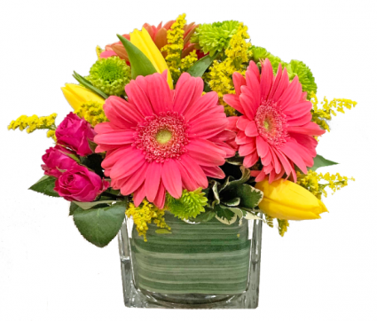 Gerbera Charm Cut flowers