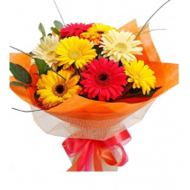 Gerbera Daisy Cut Bouquet -NO VASE Cuts