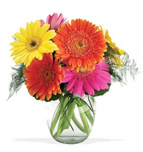 Gerbera Daisy Delight-full-ness