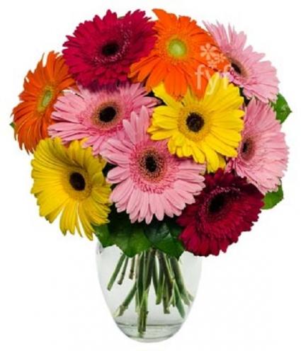 Gerbera Daisy Rainbow Bouquet Vased Arrangement In Gainesville Fl
