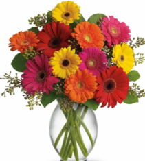 Gerbera Daisy Splash Clear glass cylinder vase