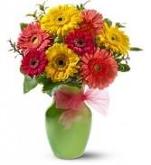 Gerbera Dazzle Floral Bouquet