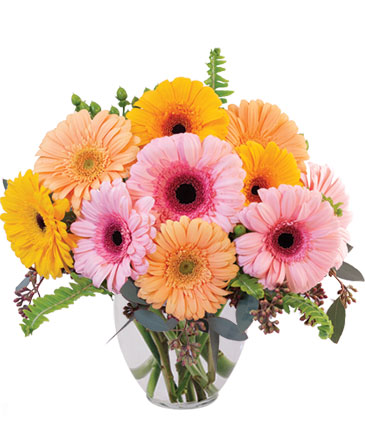 Gerbera Dreams Floral Design