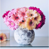 Gerbera happy