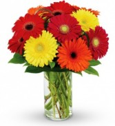 Gerbera Smiles Just Because