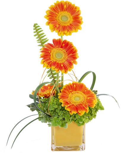 Gerbera Sunrise Floral Design