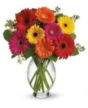 Daisy Splash Vase of Gerbera Daisy