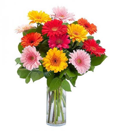 Gerberas Cheerful and playful Gerberas in a Vase