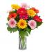 Bright Charming Gerberas Gerberas in a Vase