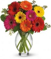 Gerbra's Bright mixed gerbera arrangement