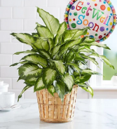 Get Well Green  Plant