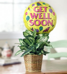 Get Well Green Plant with Balloon Plant in Spring, TX | ANGEL'S DIVINE FLOWERS