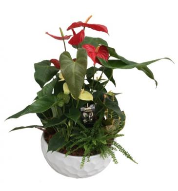 Giant Anthurium Planter