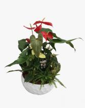 Giant Anthurium Planter- Tropical