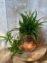 Cheers to You! Copper Mug planter with Spider Plant