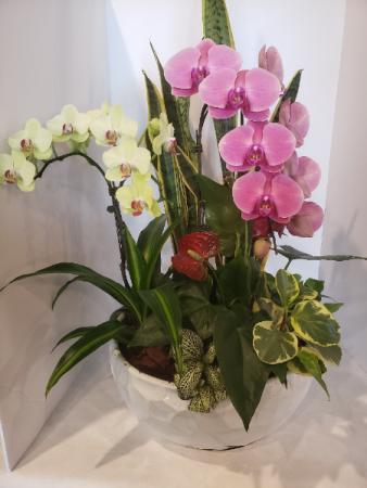 Giant Orchid Garden Planter