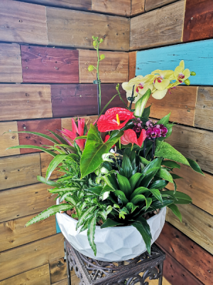 Giant Orchid Planter Orchids, Anthurium, Bromeliad, Peace lilly... in Windsor, ON | K. MICHAEL'S FLOWERS & GIFTS
