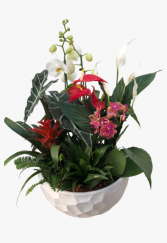 Giant Orchid Planter - SOLD OUT Tropical