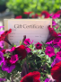 Gift Certificate Gift Certificate