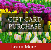 Gift Certificate  Your garden store and so much more!
