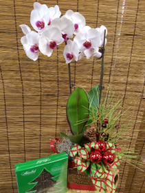 Gift of an Orchid includes box of Candy