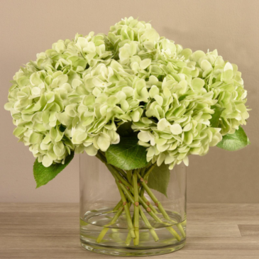 Give it to your friend Hydrangeas  Green hydrangeas