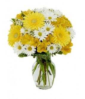 Give me a daisy a day dear Everyday