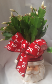 Cute Christmas cactus 4 in pot in Santa mug!