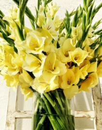 Gladiolas  Vase arrangement