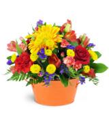 Glorious Garden - 916 Arrangement