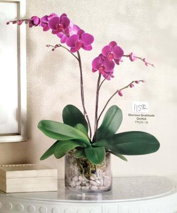 Glorious Gratitude Orchid