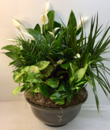 Glorious Green Plants