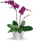 Glorious Orchid Colors May Vary